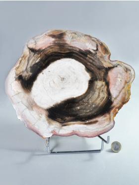 Versteinertes Holz, Deko-Scheibe, Unikat