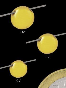 Kugel mit 2 Löchern nebeneinander, ø 6 mm, 925 vergoldet