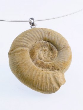 Ammonit, Franche-Comté, Unikat